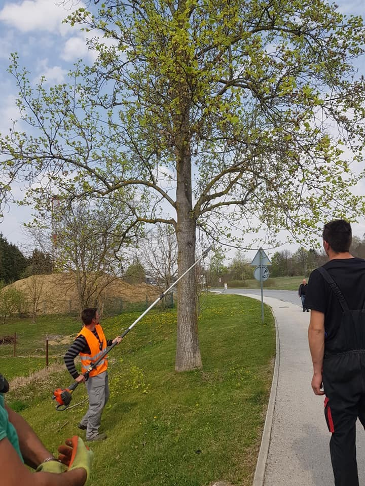 Urbano šumarstvo