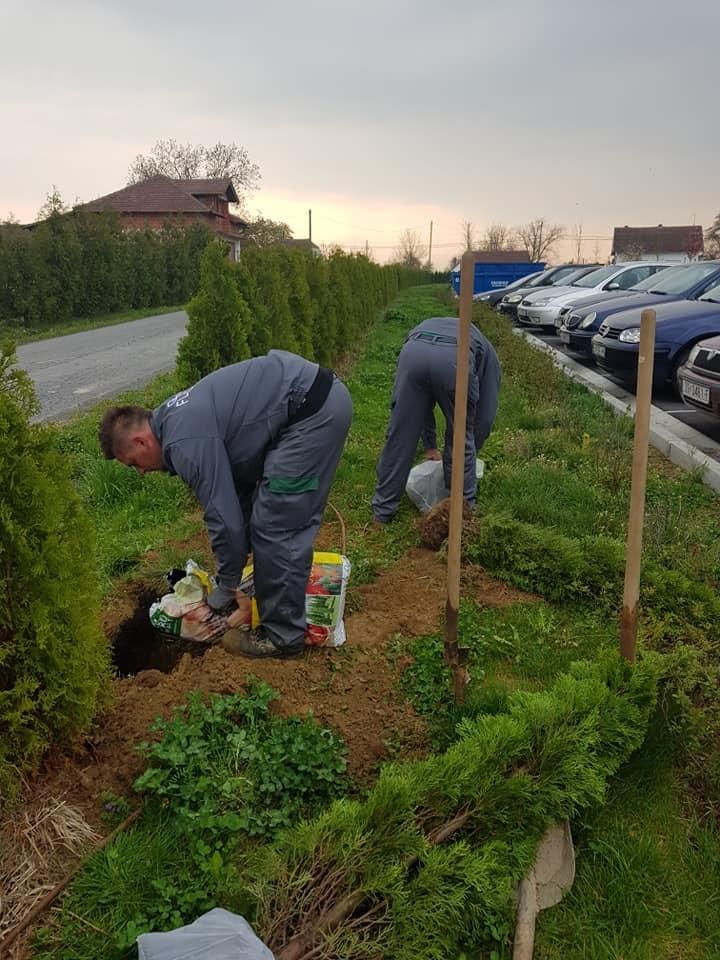 Zamjenska sadnja tuja, okopavanje gredica, šišanje žive ograde