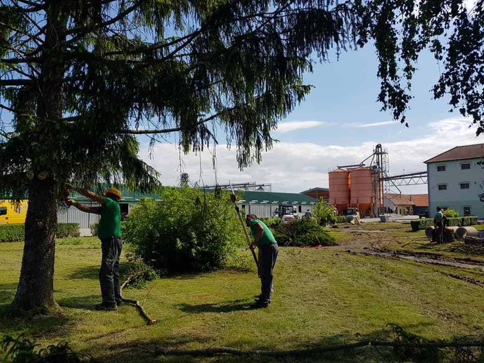 Čišćenje parcele i uklanjanje starog bilja za novi krajobrazni projekt