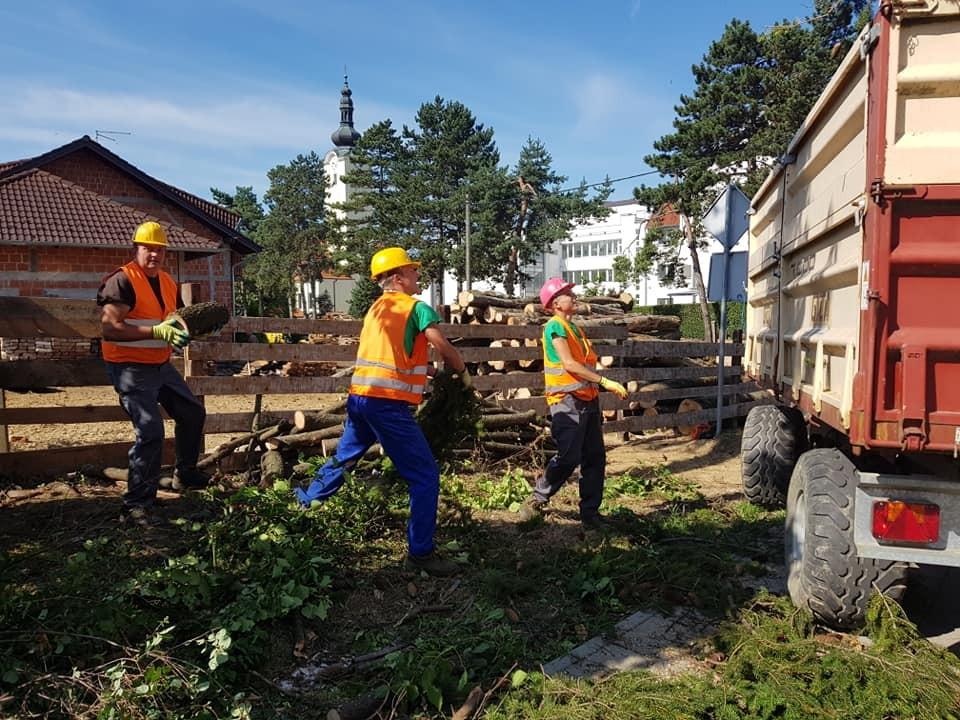 Uklanjanje potencijalno opasnih stabala u urbanim sredinama