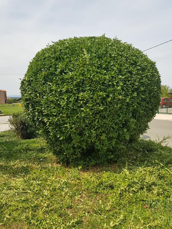 Košnja trave i uređivanje grmova