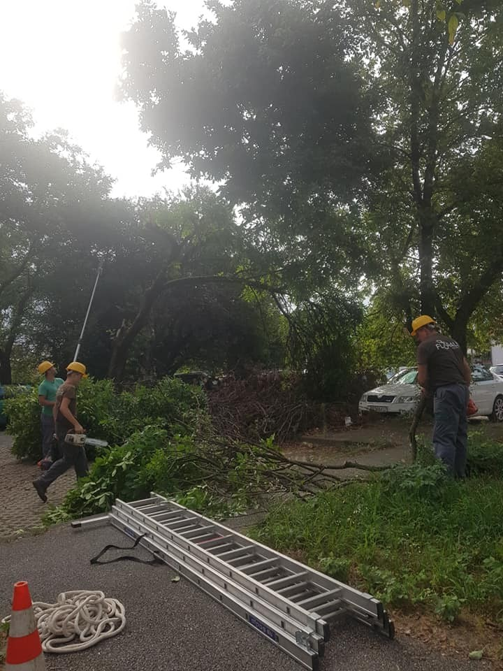 Orezivanje i uklanjanje opasnih stabala