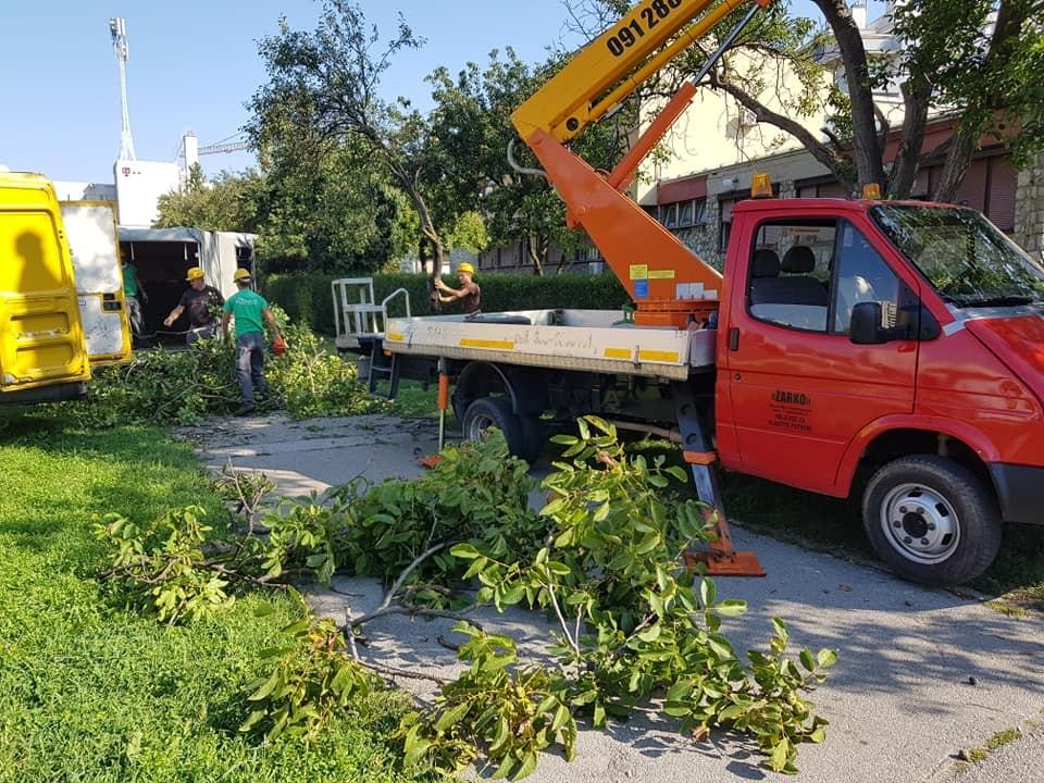 Uklanjanje i orezivanje velikih stabala