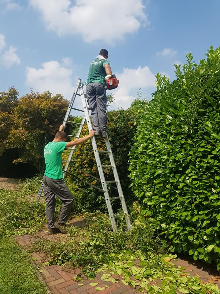 Održavanje zelenih površina naša je specijalnost