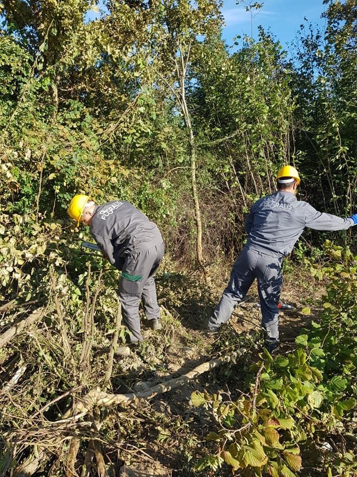 Krčenje šume i čišćenje parcele, priprema za gradilište