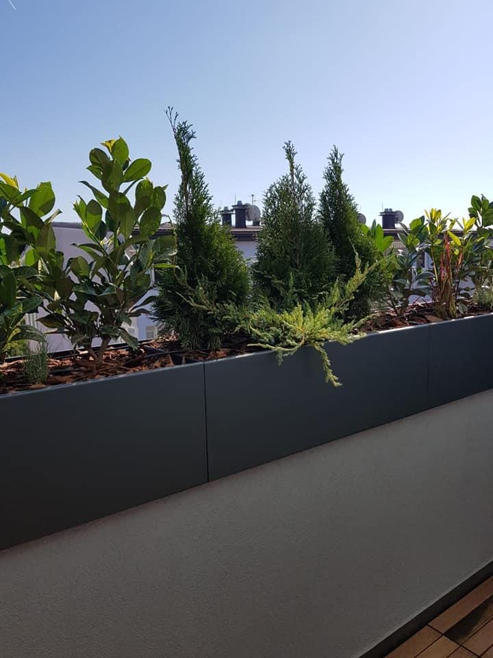Zelena privatna oaza na vrhu zgrade
