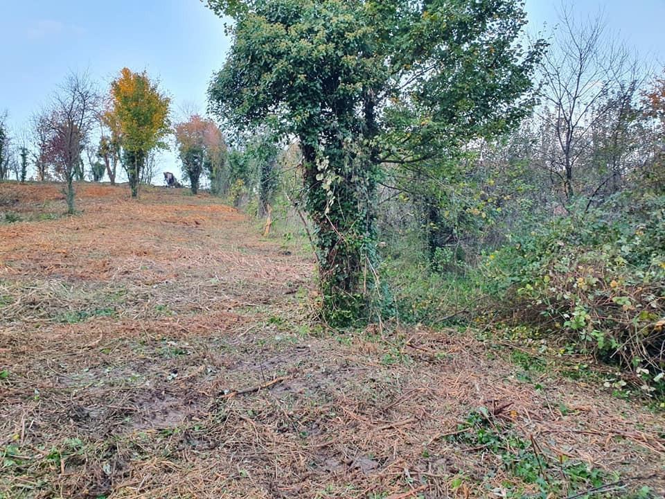 Čišćenje i malčiranje zapuštenih parcela i imanja