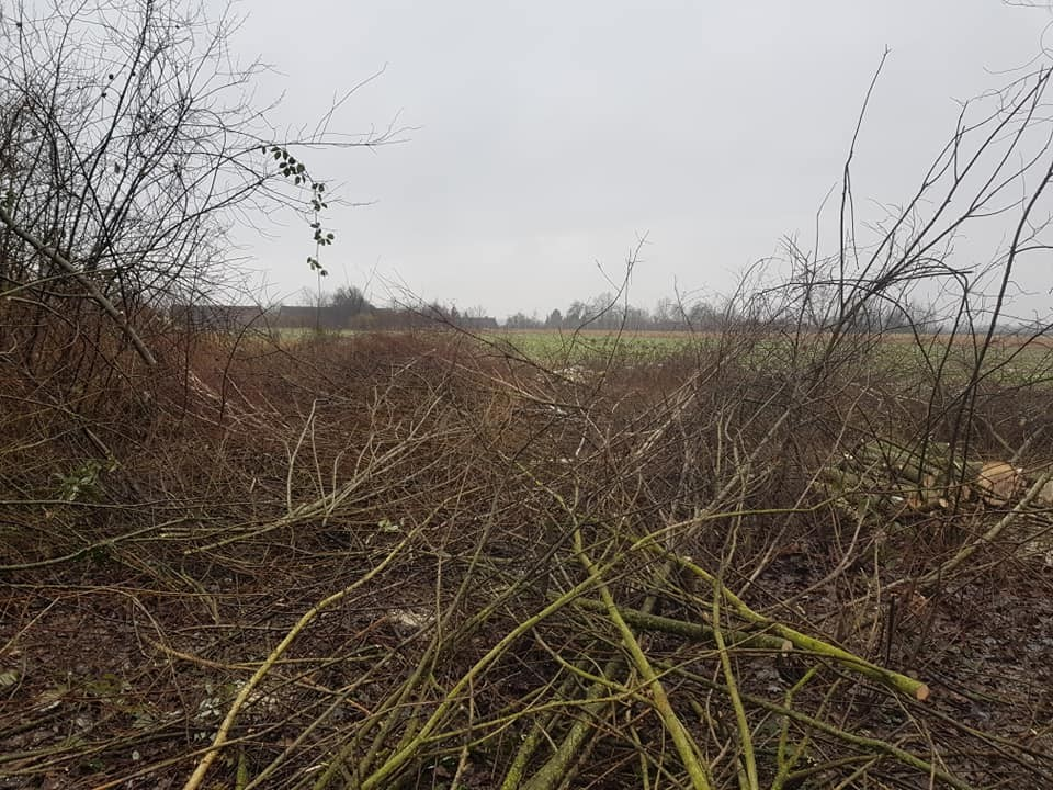 Krčenje i čišćenje parcele za buduću poljoprivrednu namjenu