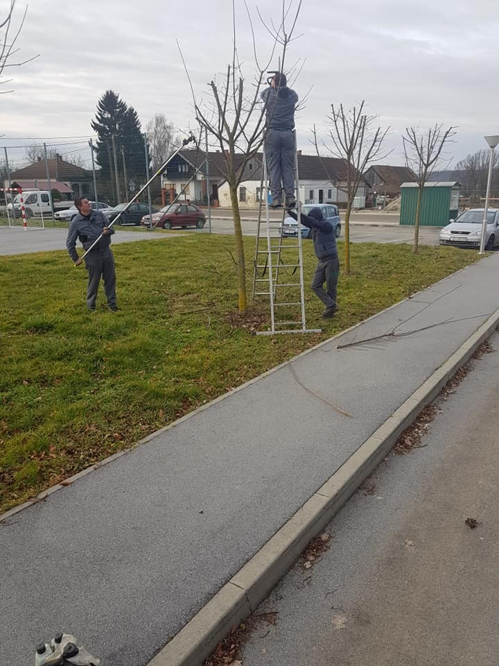 Orezivanje mladih drvorednih stabala i formiranje krošnji