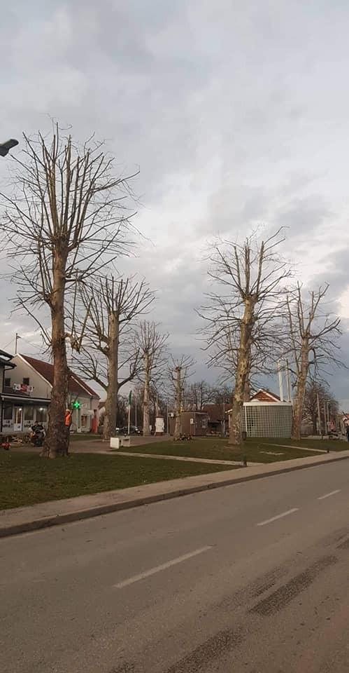 Orezivanje stabala platana u centru Dubrave