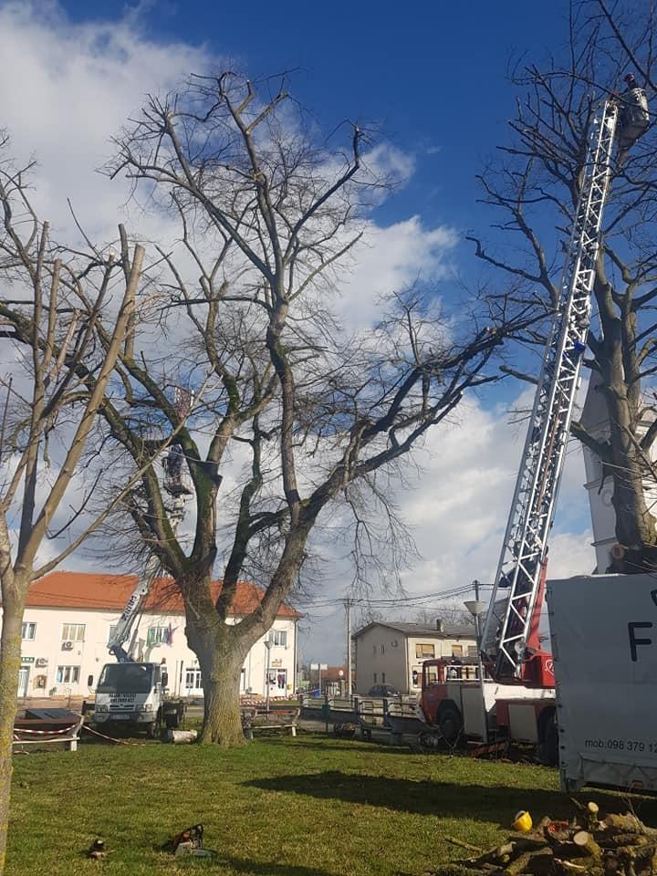 Orezivanje velikih stabala
