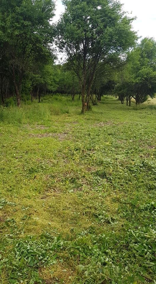 Revitalizacija okoliša, čišćenje zapuštenih površina