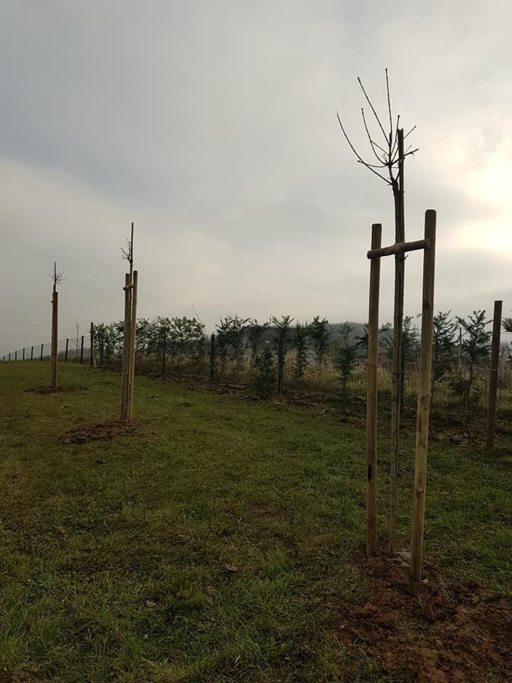 Sadnja lejlandija - najbrže rastuće živice