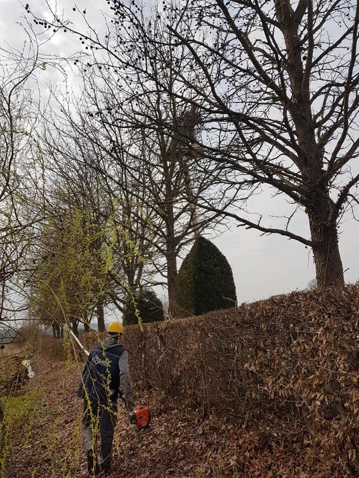 Orezivanje stabala Sveti Ivan Žabno