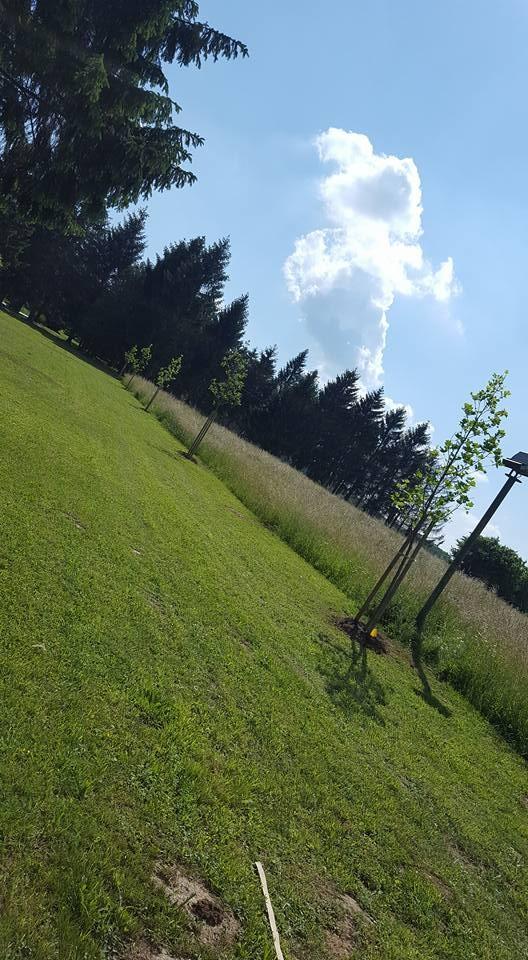 Sadnja novih stabala i postavljanje navodnjavanja u središnji park u Novoj Kapeli